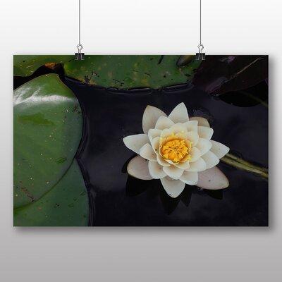 Big Box Art Flower and Pond Photographic Print