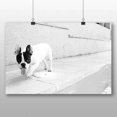 Big Box Art French Bulldog Puppy Photographic Print on Canvas