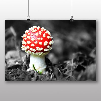 Big Box Art Forest Mushroom Photographic Print Wrapped on Canvas