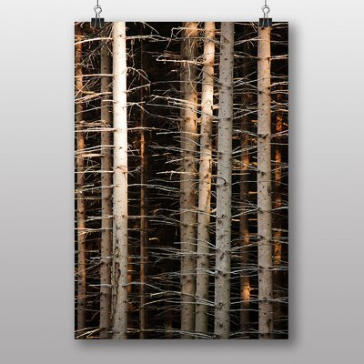 Big Box Art Deep Forest Wood Trees No.2 Photographic Print on Canvas