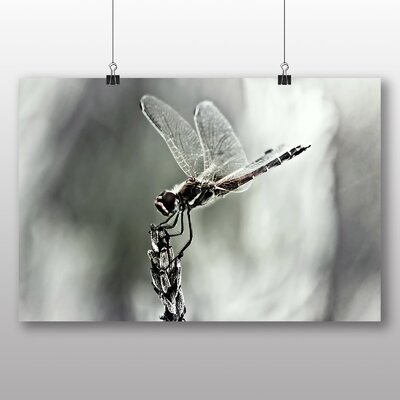 Big Box Art Dragonfly No.4 Photographic Print on Canvas