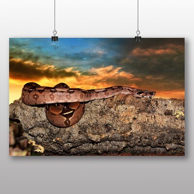 Big Box Art Emperor Snake Photographic Print Wrapped on Canvas
