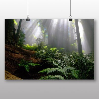 Big Box Art Forest Moyan Brenn No.2 Photographic Print Wrapped on Canvas