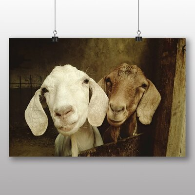 Big Box Art Goats Photographic Print Wrapped on Canvas