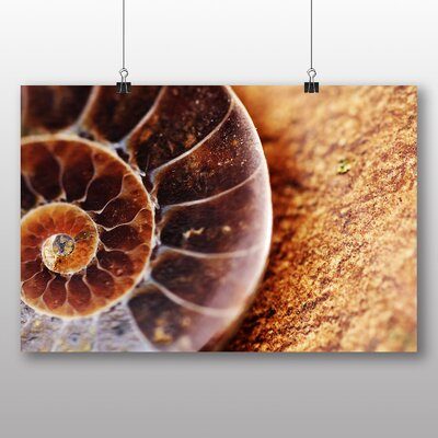 Big Box Art Fossil Shell Photographic Print Wrapped on Canvas