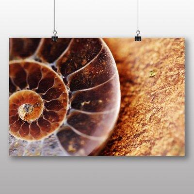 Big Box Art Fossil Shell Photographic Print