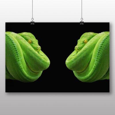 Big Box Art Green Tree Python Snake No.2 Photographic Print on Canvas
