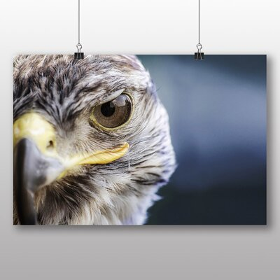 Big Box Art Falcon No.2 Photographic Print on Canvas