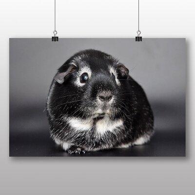 Big Box Art Guinea Pig Photographic Print on Canvas