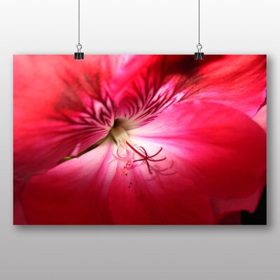 Big Box Art Geranium Pink Flower Graphic Art