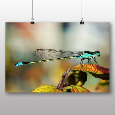Big Box Art Dragonfly No.7 Photographic Print
