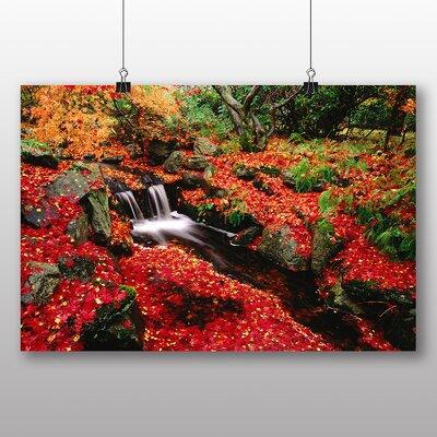 Big Box Art Forest Floor Photographic Print
