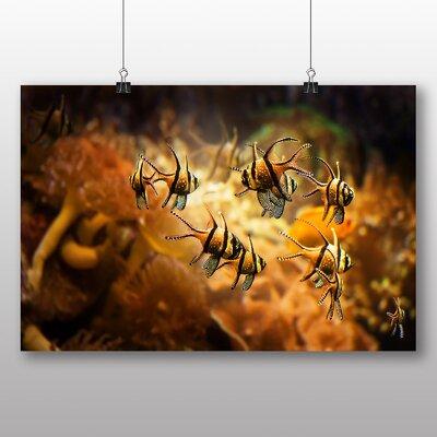 Big Box Art Fish Photographic Print
