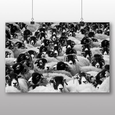 Big Box Art Flock of Sheep Photographic Print Wrapped on Canvas