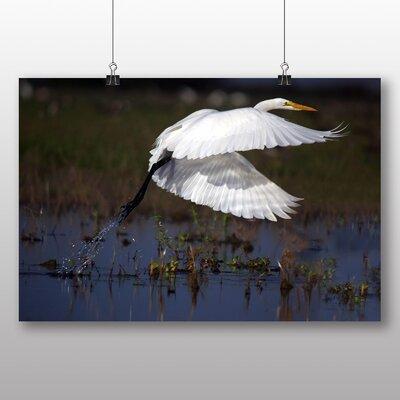 Big Box Art Great Egret Photographic Print