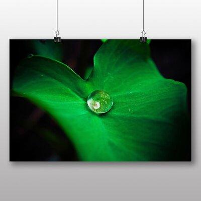 Big Box Art 'Green Leaf and Water Drop' Photographic Print
