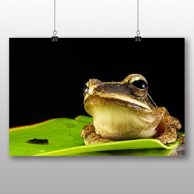Big Box Art Frog No.3 Photographic Print Wrapped on Canvas
