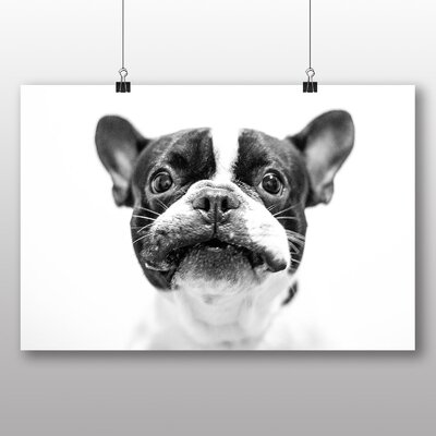 Big Box Art French Bulldog Photographic Print Wrapped on Canvas