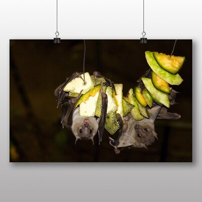 Big Box Art Fruit Bats Photographic Print Wrapped on Canvas
