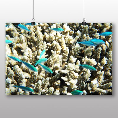 Big Box Art Great Barrier Reef Fish Coral Photographic Print