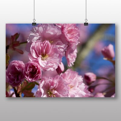 Big Box Art Japan Pink Cherry Blossom No.2 Photographic Print on Canvas