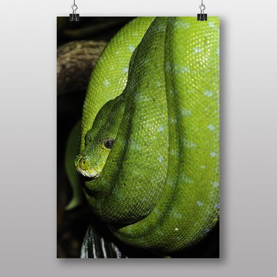Big Box Art Green Tree Python Snake No.4 Photographic Print Wrapped on Canvas