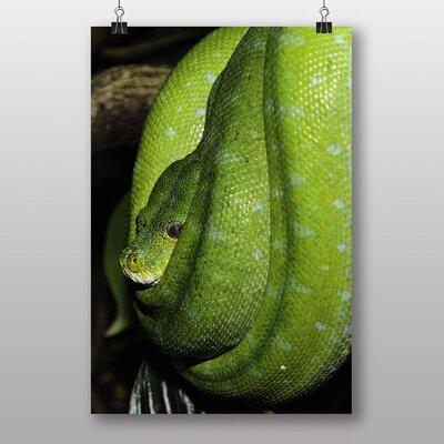 Big Box Art Green Tree Python Snake No.4 Photographic Print