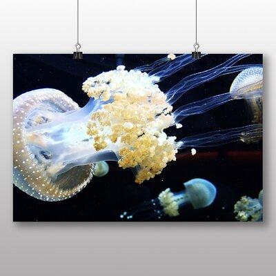 Big Box Art Jellyfish No.6 Photographic Print