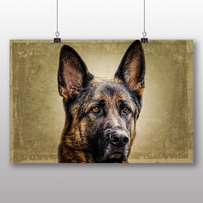 Big Box Art German Shepherd Alsation Dog Photographic Print Wrapped on Canvas