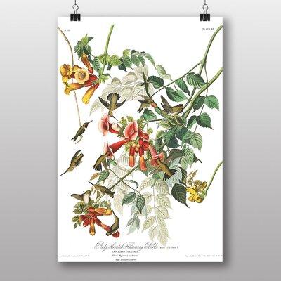 Big Box Art Ruby Throated Humming Bird by John James Audubon Graphic Art