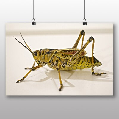 Big Box Art Grasshopper No.2 Photographic Print on Canvas