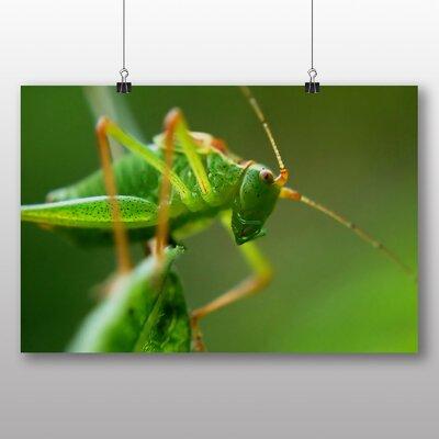 Big Box Art Grasshopper Photographic Print on Canvas