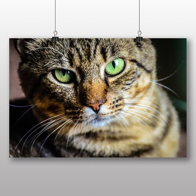 Big Box Art Green Eyed Cat No.2 Photographic Print Wrapped on Canvas