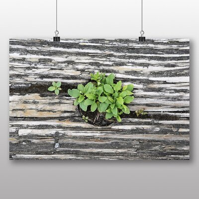 Big Box Art 'Green Plant Through the Wood' Photographic Print