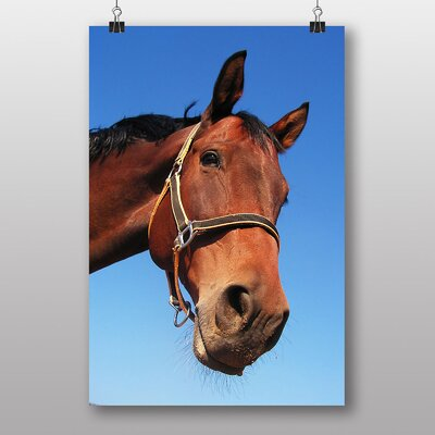 Big Box Art Horse Photographic Print