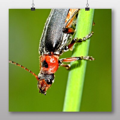 Big Box Art Insect on Grass Photographic Print