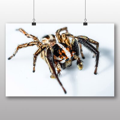 Big Box Art Jumping Spider No.5 Photographic Print Wrapped on Canvas