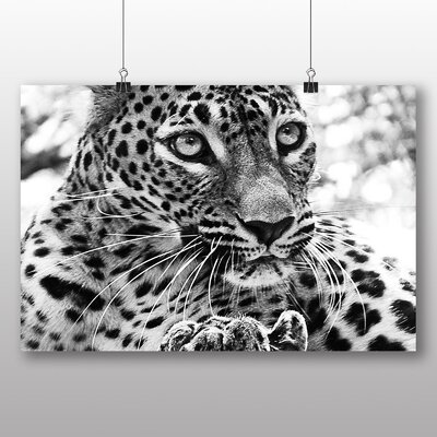 Big Box Art Jaguar No.3 Photographic Print