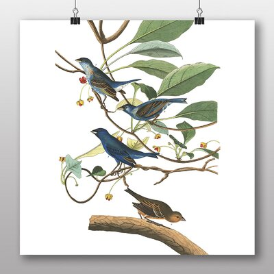 Big Box Art 'Indigo Bird' by John James Audubon Graphic Art