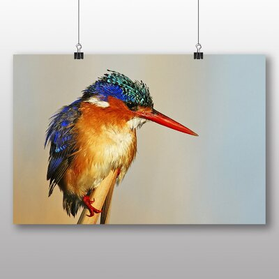 Big Box Art Kingfisher Photographic Print Wrapped on Canvas