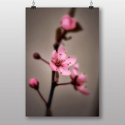 Big Box Art Japanese Cherry Blossom No.2 Photographic Print