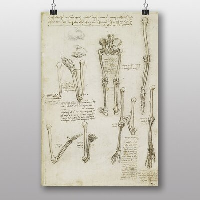 Big Box Art Leonardo Da Vinci Anatomy No.7 Graphic Art
