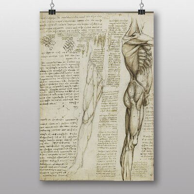 Big Box Art Leonardo Da Vinci Anatomy No.6 Graphic Art