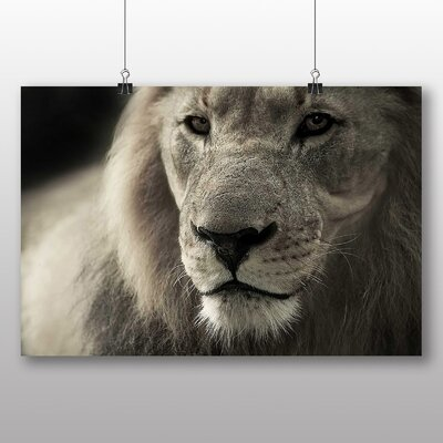 Big Box Art Lion No.2 Photographic Print