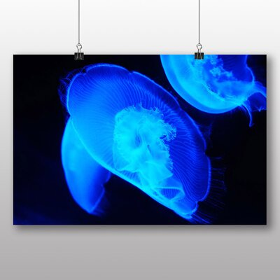 Big Box Art Jellyfish No.4 No.2 Graphic Art on Canvas