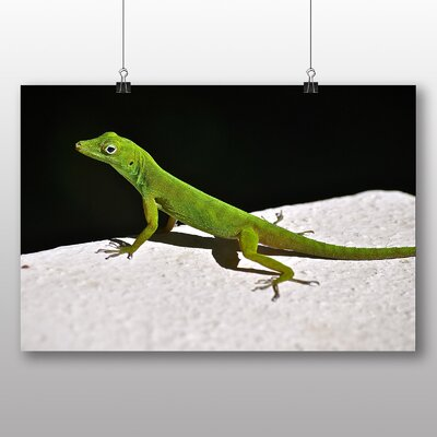 Big Box Art Lizard No.3 Photographic Print Wrapped on Canvas