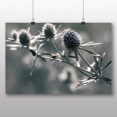 Big Box Art Ladybug Ladybird Thistle Photographic Print Wrapped on Canvas