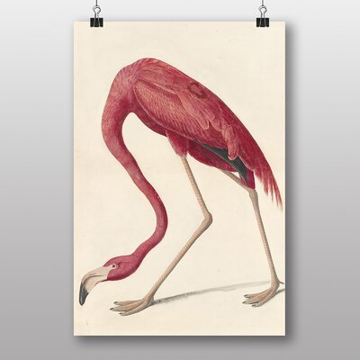 Big Box Art Flamingo by John James Audubon Graphic Art