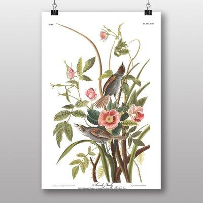 "Big Box Art ""Sea Side Finch"" by John James Audubon Art Print"