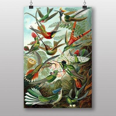Big Box Art Hummingbirds Vintage Graphic Art